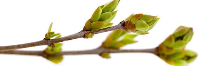 Magentina Macerated Herbs