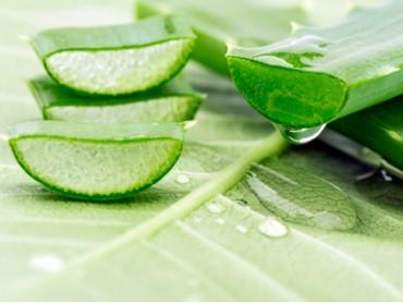 L'Aloe: una pianta miracolosa