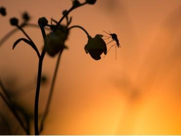 Consigli infallibili per tenere lontane le zanzare!