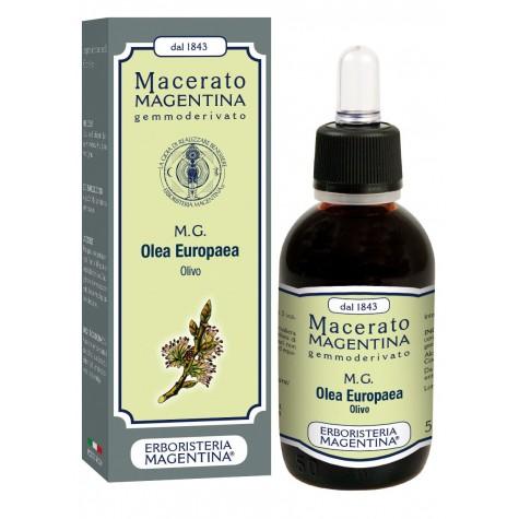 MG Olea Europaea
