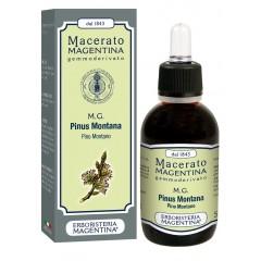 MG Pinus Montana